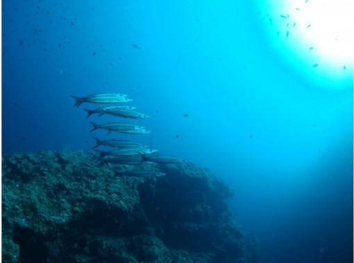 沖縄本島ビーチファンダイビング2本