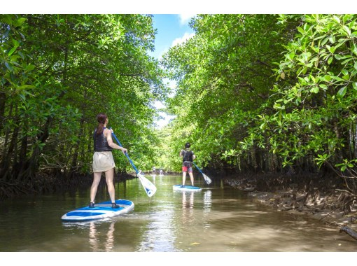 [Okinawa / Iriomote Island] ⑧ Regional common coupon OK! [half-day] Aim for a lucky waterfall! SUPor canoe tour that you can choose with a large standard mangrove!の紹介画像