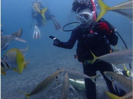 【静岡・沼津】大瀬崎でしずおかな海で 体験ダイビング☆お客様のペースに合わせてご案内☆の紹介画像