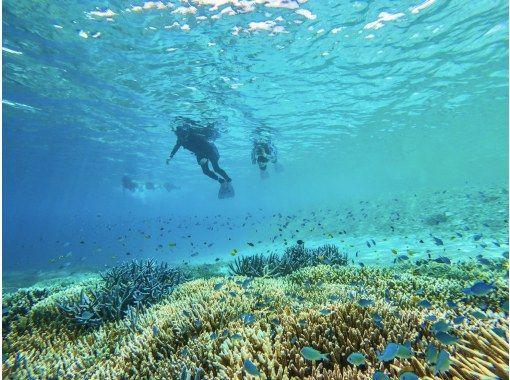 """【西表岛/半日游】⑯在珊瑚碎片构成的""""奇迹岛""""上和海龟一起游泳吧! Barasu岛乘船浮潜[照片数据免费]の紹介画像"""