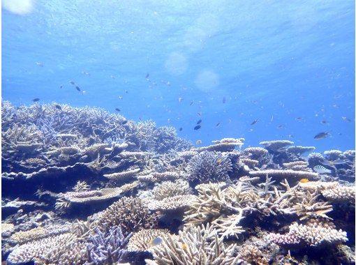 """【西表島/半日】在珊瑚碎片構成的""""奇蹟島""""上和海龜一起游泳吧! Barasu島乘船浮潛[照片數據免費]の紹介画像"""