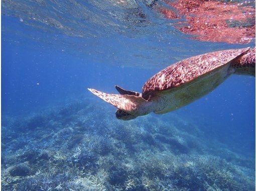 [沖縄/西表島]⑰地區共同優惠券OK! [半天]讓我們一起玩超級稀有的魚!熱帶船浮潛[免費照片數據]の紹介画像