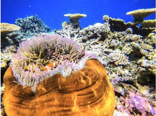 [沖縄/西表島]⑲地區共同優惠券OK! [半天]自然的運動!西表島石灰岩洞穴探險[免費照片數據]の紹介画像