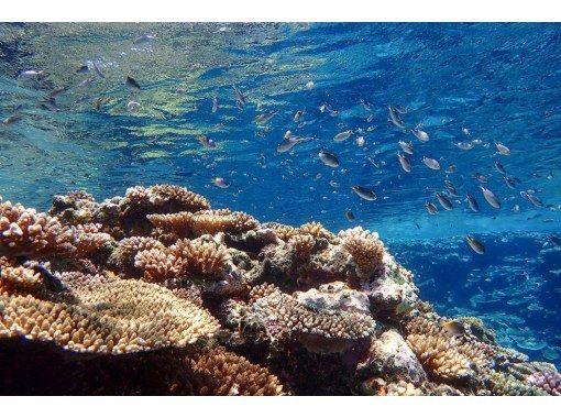 【石垣岛/1天】⑨全天在河里和海里!天然纪念物红树林苏泊尔独木舟和蓝洞浮潜 [无照片数据]の紹介画像