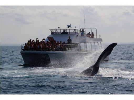 【地域共通クーポン対象】【沖縄・慶良間】遭遇率98%!揺れに強いカタマラン船で行く「ホエールウォッチング」全額返済制度あり!