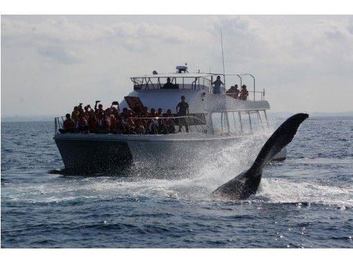 【地域共通クーポン対象】【沖縄・慶良間】遭遇率98%!揺れに強いカタマラン船で行く「ホエールウォッチング」全額返済制度あり!の紹介画像