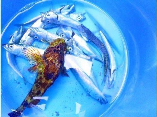 【千葉・南房総・館山】手ぶらでOK!海釣り体験@レンタル釣り竿!初心者&お子様大歓迎♪/90分コースの紹介画像