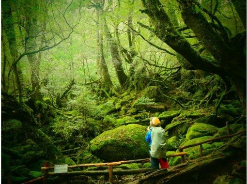 【鹿児島・屋久島】白谷雲水峡の「もののけの森」(苔むす森)を目指すツアー(半日ツアー)