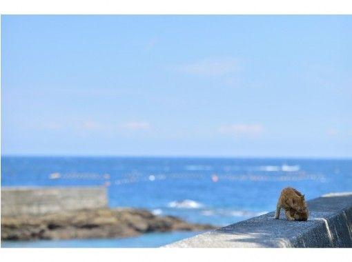 【春におすすめ!】猫の島!にゃんこと仲良くなれるツアー(1ドリンク付き)