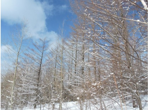 【北海道・富良野】麓郷スノーシュートレッキング  北海道の食材をつかった特製ランチつき!