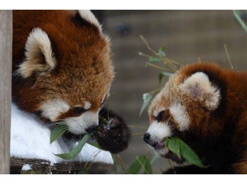 【北海道・札幌発着】滞在時間約4時間入園券付!人気の冬の旭山動物園を満喫・日帰りバスツアー