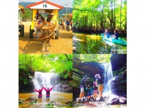 【西表島】マングローブSUP・カヌー秘境の滝巡り&由布島観光コース【ツアー写真データ無料】