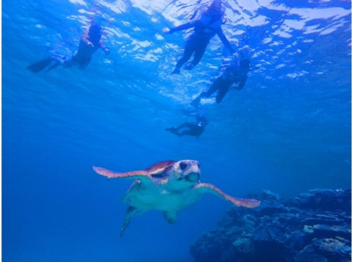 """""""GoTo Travel Coupon Target Store"""" [From Okinawa / Headquarters] Half-day snorkeling tour near Minna Island ★ Free rental camera service for 4 people or more ★の紹介画像"""