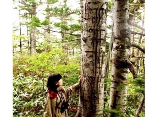 [Hokkaido Shiretoko] World Natural Heritage Core Zone Shiretoko Five Lakes 3 hours all around! Guided morning trekking (up to 10 people)の紹介画像