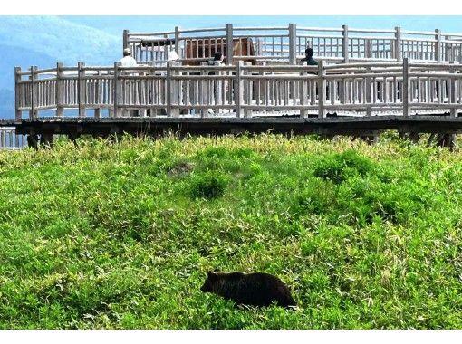 【北海道・知床】世界自然遺産コアゾーン知床五湖 全周3時間!ガイド付き昼のトレッキング(10名様迄)の紹介画像