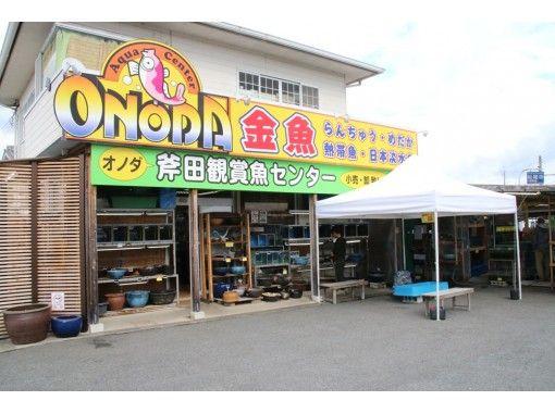 【奈良・斑鳩】日本初の金魚ゼミが斑鳩に!「観賞魚専門店の見学ツアー」