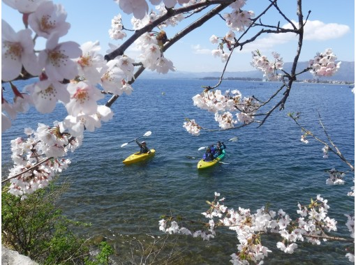 [Shiga ・ Biwako canoe] Spring cherry blossom viewing canoe tour (180 minutes) photo data present! ※ Hold for a limited time ※の紹介画像