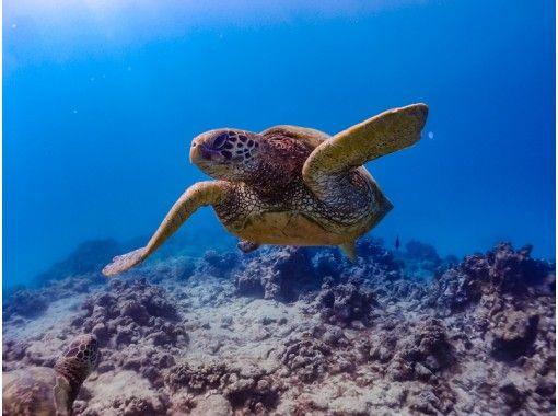 可以使用地區通用的優惠券♪[沖縄/古宇利島]每組有安全的租船經驗!讓我們尋找小丑魚和海龜浮潛之旅60分鐘♪の紹介画像