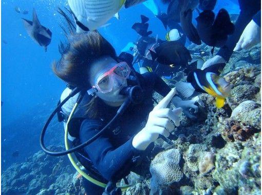 GoTo地域共通クーポン利用可能!カメラレンタル無料!海がめ遭遇率大!国立指定公園、慶良間諸島半日体験ダイビング!(ダイビング2回)の紹介画像