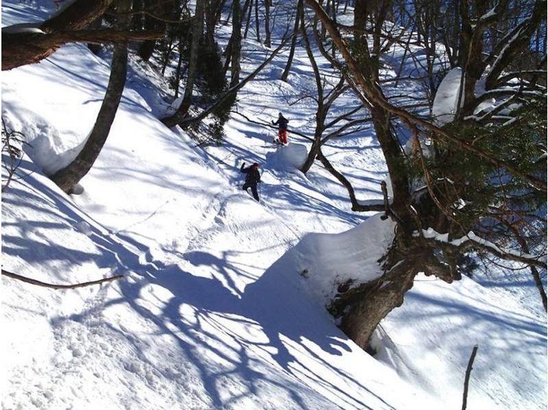 【富山・立山黒部】ハイキングスキーツアー(テレマークスキー)の紹介画像