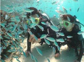 オーシャンズ石垣島(OCEANS)の画像