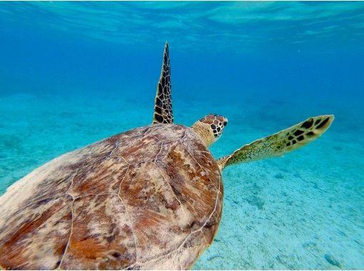 【鹿児島・奄美大島】ウミガメと泳ごう!ウミガメと泳ぐシュノーケリングツアー・遭遇率100%!
