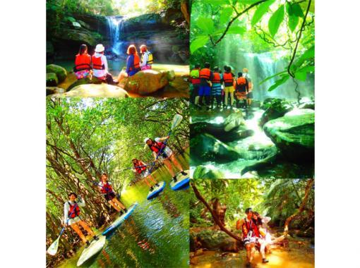 [World Heritage Iriomote Island] Summer only! Swim with canoe x sea turtles! Mangrove Canoeing x Unexplored Power Spot Tour & Barasu Island Snorkeling [Tour Photo Data Freeの紹介画像