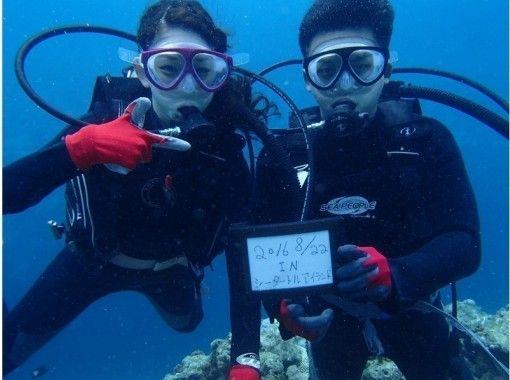【沖縄・慶良間】クルージング+体験ダイビング+シュノーケリング+無人島上陸orホエールウォッチング