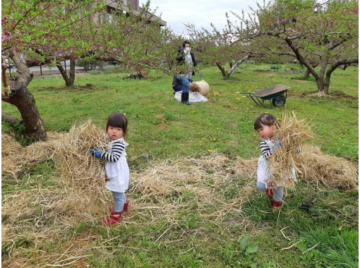 Holiday in the farm for picnics in the fieldの紹介画像