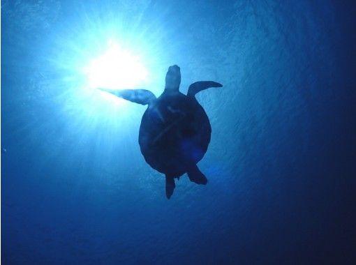 [Okinawa / Ishigaki Island] Let's swim with popular sea turtles! Half-day snorkeling   Underwater camera rental freeの紹介画像