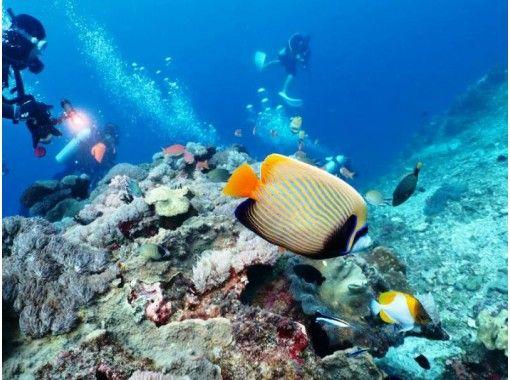 【三浦半島・城ヶ島】海で体験ダイビング!初めてでも安心《東京発送迎あり》