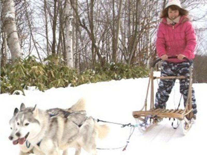 【北海道・札幌】ソリで駆けていく爽快感!犬ぞり体験(ロングコース)の紹介画像