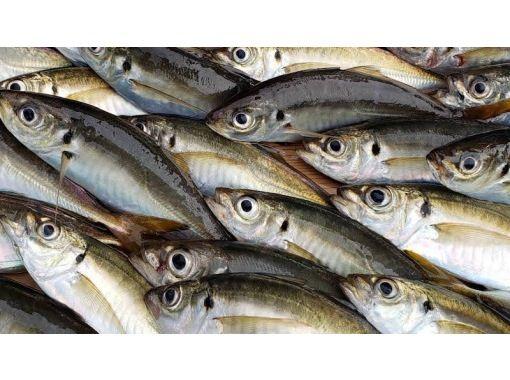 【神奈川・金沢八景】手軽に釣ろう半日アジ!初心者・女性・お子様大歓迎!船釣りを楽しもう!の紹介画像