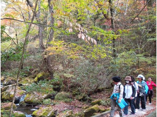【熊本・阿蘇】くまもっと 黒川温泉清流の森ガイドウォーキング・マイナスイオンをたっぷり吸収♪