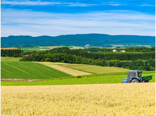 【北海道・札幌発着】夏のベストシーズンに行く!富良野ラベンダー畑と美瑛青い池を楽しむ旅の紹介画像