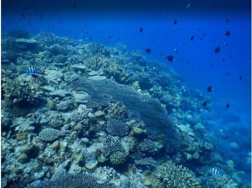 [오키나와 민나 섬 · 세 소코 섬] 보트 체험 다이빙 (2 다이브) 오전 1 조 오후 1 세트 한정 사진 선물の紹介画像