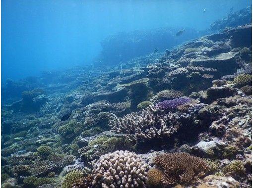 [Churaumi Aquarium, Nakijin Village area, hidden beach held! ] 1 set reserved! Sap & experience skin diving course! Photo serviceの紹介画像