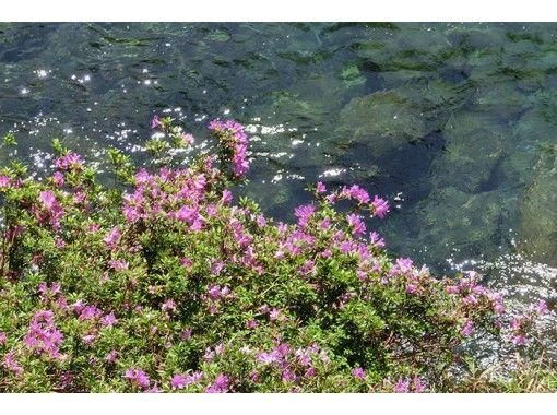 【高知・本山町】お子様も楽しめる!汗見川の四季を彩る草木をご自宅に♪ コケ玉作り