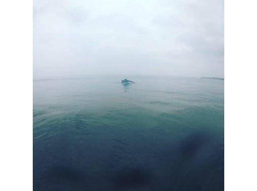 【千葉・館山】初心者歓迎!サーフィンスクール!体験中のお写真プレゼント♪