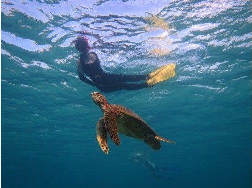 【HISスーパーサマーセール実施中】貸切ツアー♪可愛いウミガメに会いに行く☆ワクワクシュノーケルツアー