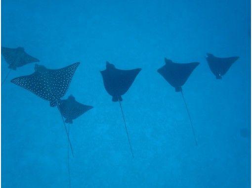 【宮古島・素潜り経験者】貸切ツアー♪ウミガメのちサメ時々マダラトビエイ!深めポイントでスキンダイビング