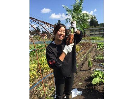 【秋田・大館】農家民宿に泊まってほっこり田舎の生活を体験!本場のきりたんぽ作り体験・ミニ農作業つき♫
