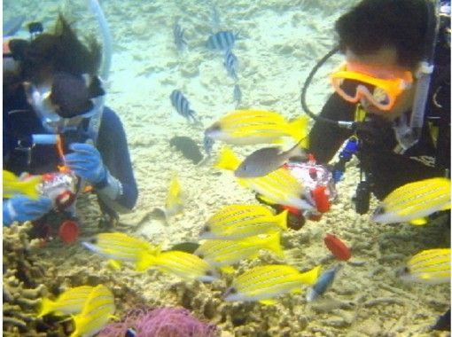 [Okinawa Sesoko Island] deals set plan! Parasailing & Divingの紹介画像