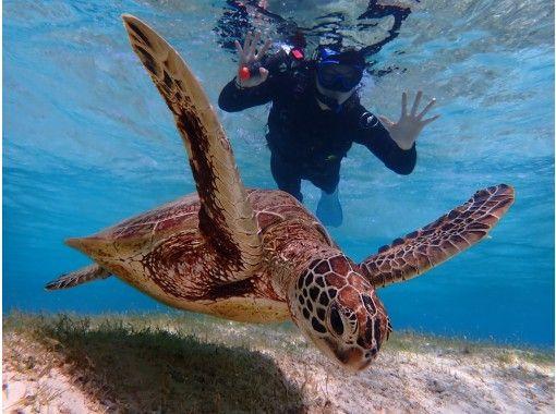 【宫古岛/半天】⑧世界上最高的相遇率!热门海龟浮潜 [照片数据免费]の紹介画像