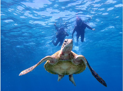 [Miyakojima / Half-day] The encounter rate is one of the highest in the world! Popular sea turtle snorkeling [photo data free]の紹介画像