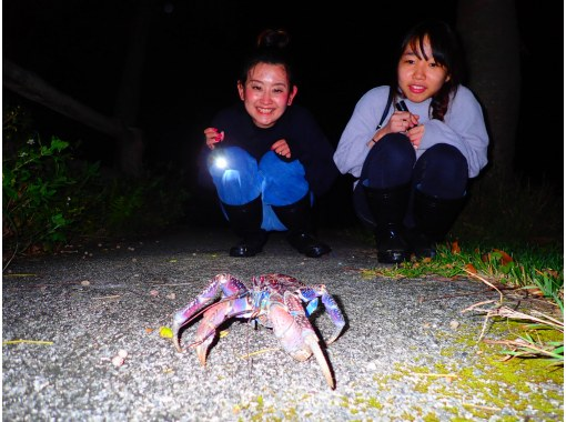 [Miyakojima / Night] Natural planetarium x tropical rare creatures! Starry sky & subtropical jungle night tour to enjoy the night of Miyakojima [Same-day reservation OK]の紹介画像