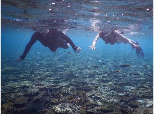 【沖縄・水納島・瀬底島】 ボートスノーケリング 午前1組 限定開催 写真撮影無料の紹介画像