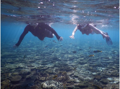[Okinawa / Minna Island / Sesoko Island] Boat snorkeling limited to 1 group in the morning Photographing freeの紹介画像