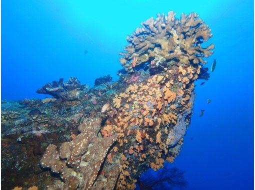 【沖縄・慶良間】慶良間諸島 1日 2ダイブ 格安 体験ダイビング シュノーケリングの紹介画像