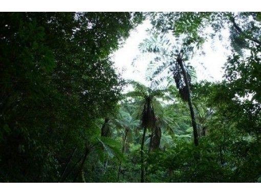 【鹿児島・奄美】奄美固有の植物や生物を満喫「金作原探検コース」奄美の自然を満喫!